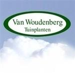 Van-Woudenberg-Tuinplanten-BV