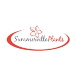 Summerville-plants