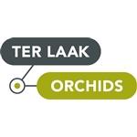 Ter-Laak-Orchids-Miniflora-plus-Concepten