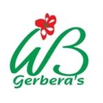 WB-Gerberas