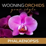 Wooning-Orchids--Phalaenopsis